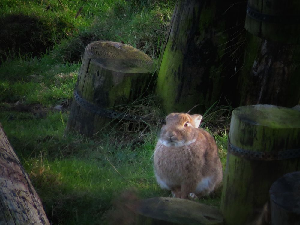 Hello World Taking Photos Check This Out From My Point Of View Out Walking Nature Wild Hare Rabbit Enjoying Life Ireland🍀 February 2016
