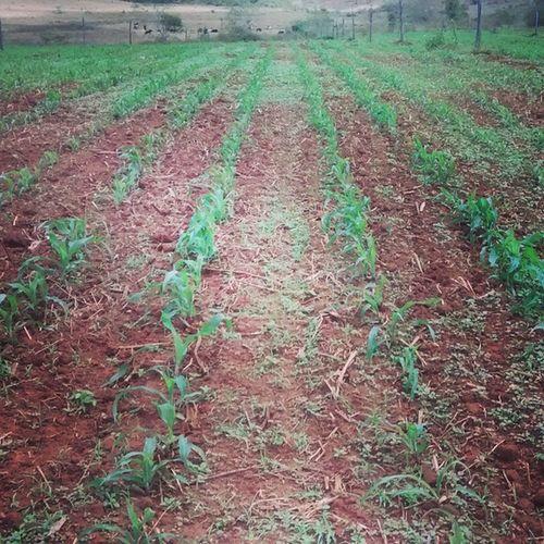 Agronomando, Seguindo a estrada, firme e forte. AgronomiaPaixao