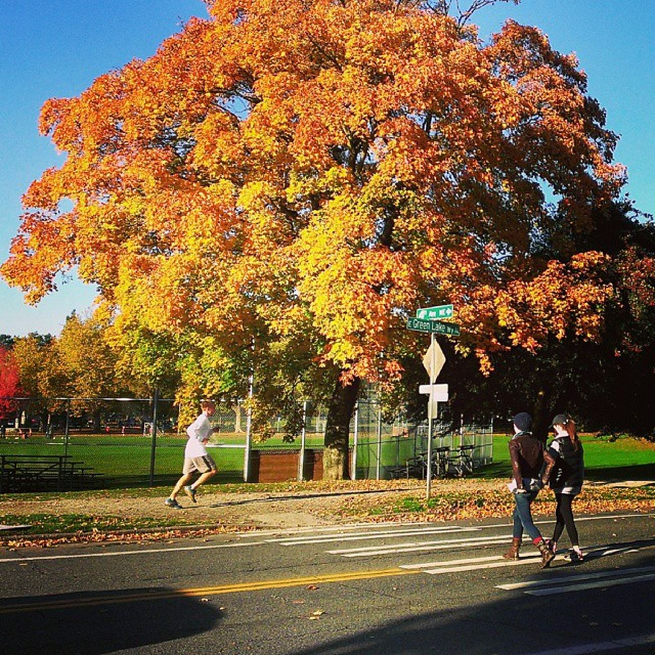 Seattle EmeraldCity Washingtonstate Fall autumn greenlake tree running runner portland upperleftusa vancouver fitness nyc LA