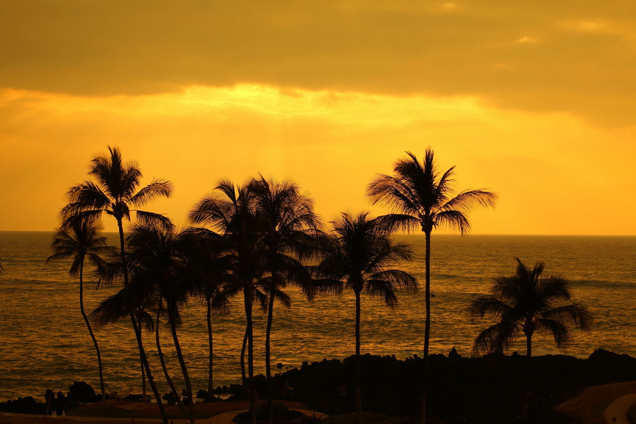 Sunset on the pacific ocean!🌞🌞 Sunset Palm Tree Beach Palm Trees Palmtrees Sea Tree Silhouette Dramatic Sky Nature Scenics Vacations Plant Sky Golden Hour Golden Travel Coastline Coast Big Island in Hawaii United States