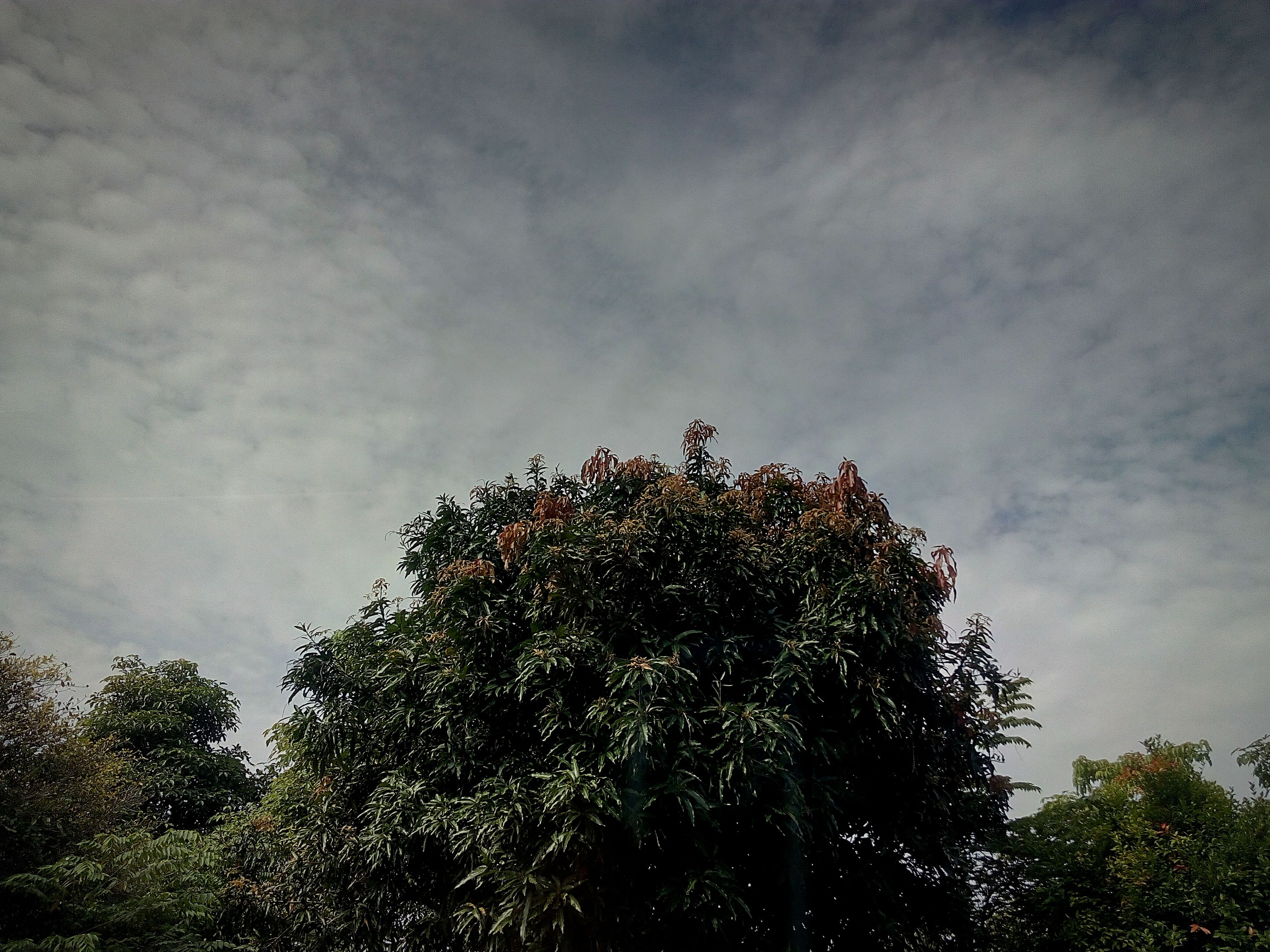 tree, sky, nature, growth, beauty in nature, tranquility, star - space, milky way, night, no people, summer, outdoors, treetop, astronomy, galaxy, space