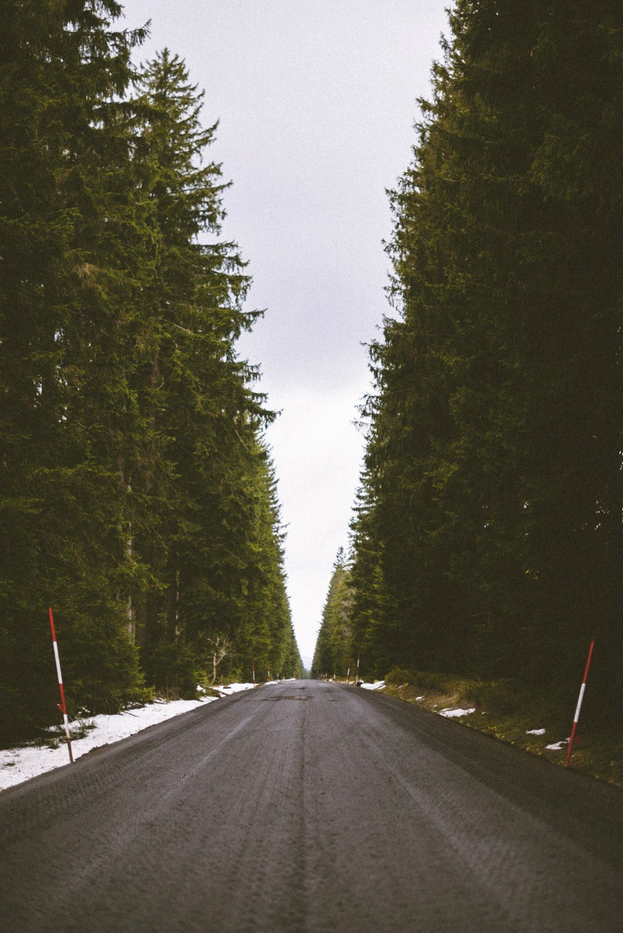 Road Forest Drive Roadtrip Road The Way Forward Transportation Diminishing Perspective Tree Day No People Outdoors Sky Nature
