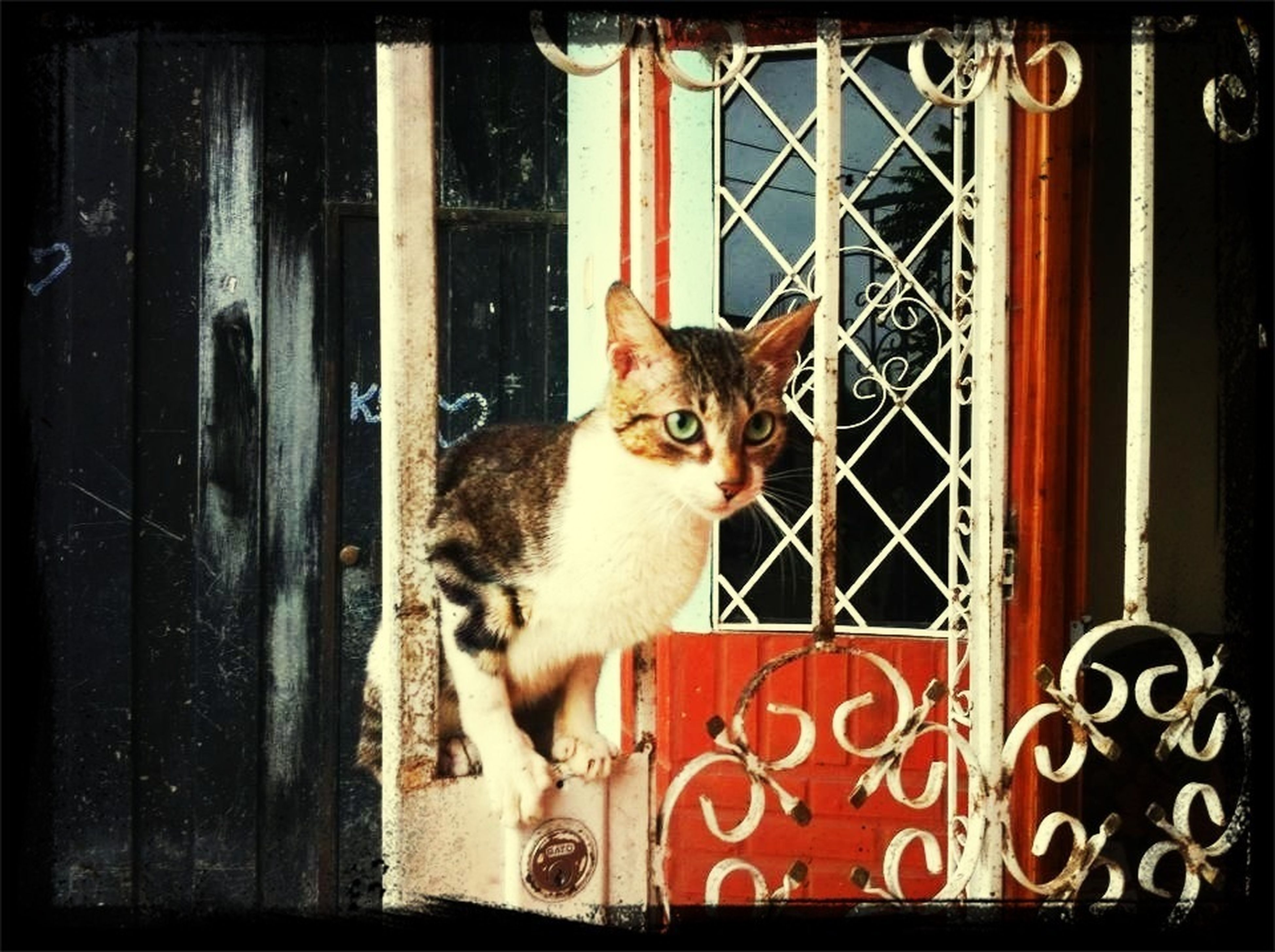 pets, animal themes, domestic animals, one animal, mammal, domestic cat, portrait, cat, window, looking at camera, feline, sitting, door, metal, front view, indoors, close-up, whisker, no people
