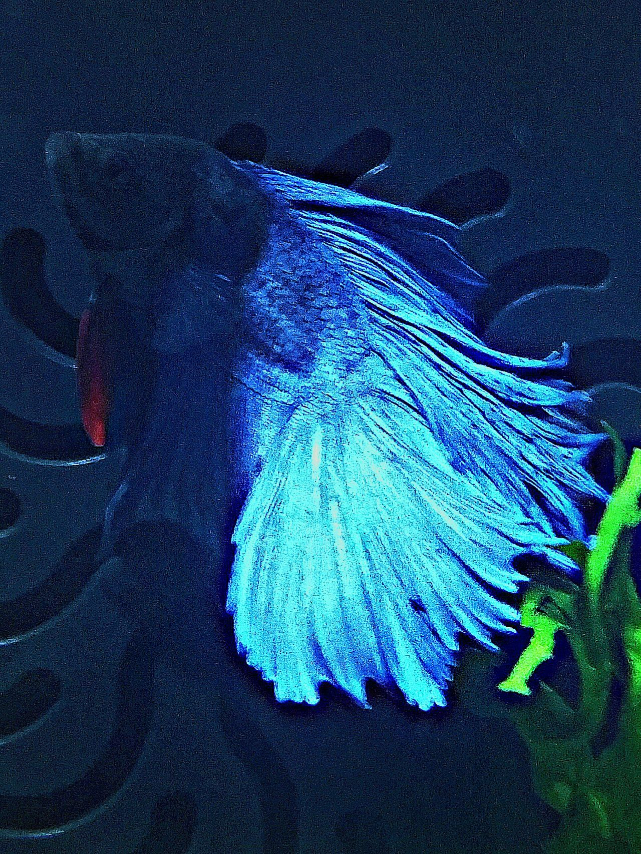 Fish Betta Fish Bettas Bettasiamesefish Bettafishcommunity Bettatank Aquarium Life Aquarium Photography