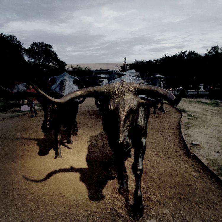 Fallas Longhorns