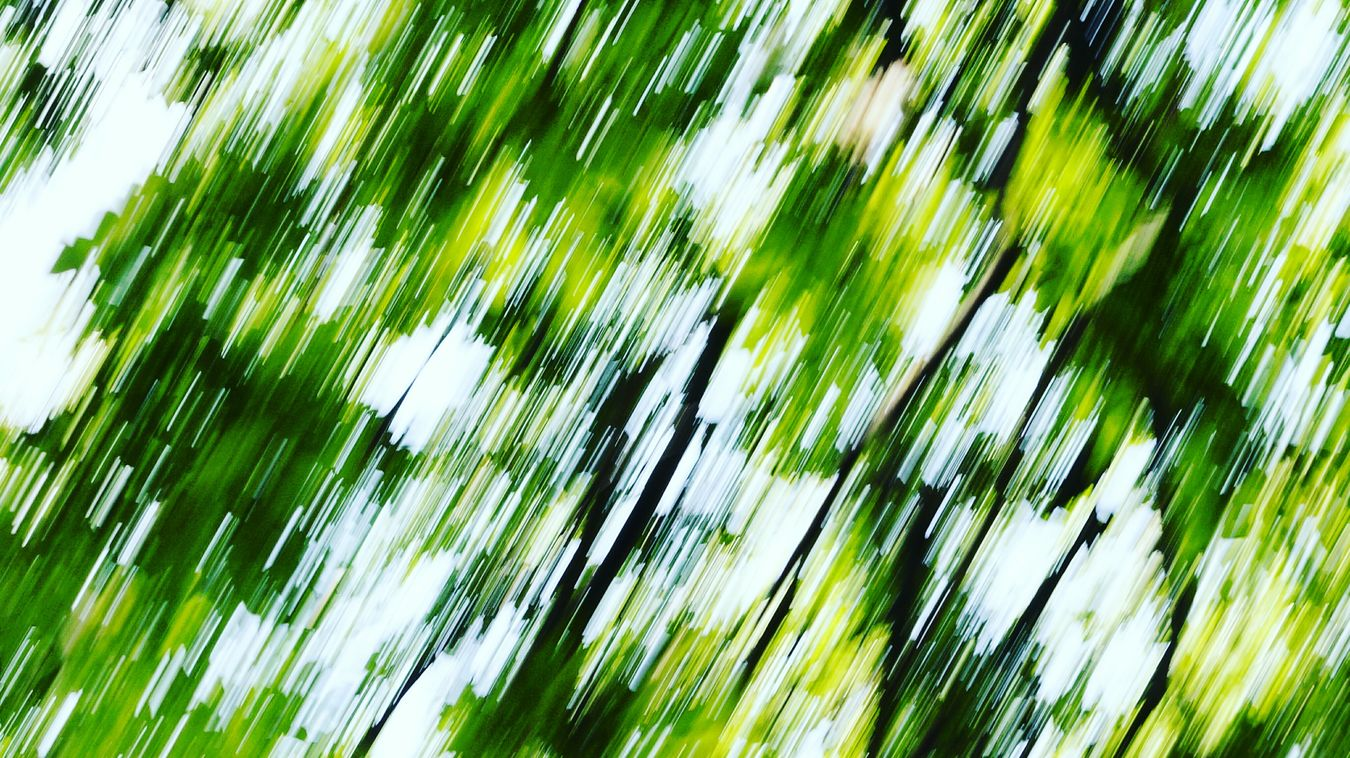 Wen the Camera Shakes it. Green Color Tree Tree Trunk Outdoors Natural Pattern Backgrounds Freespirit Color Of Life Snaping Pictures  Wandering Mind Beauty In Nature Nature Shaky Shakyhands Abstract Abstract Photography Abstractart Abstract Nature