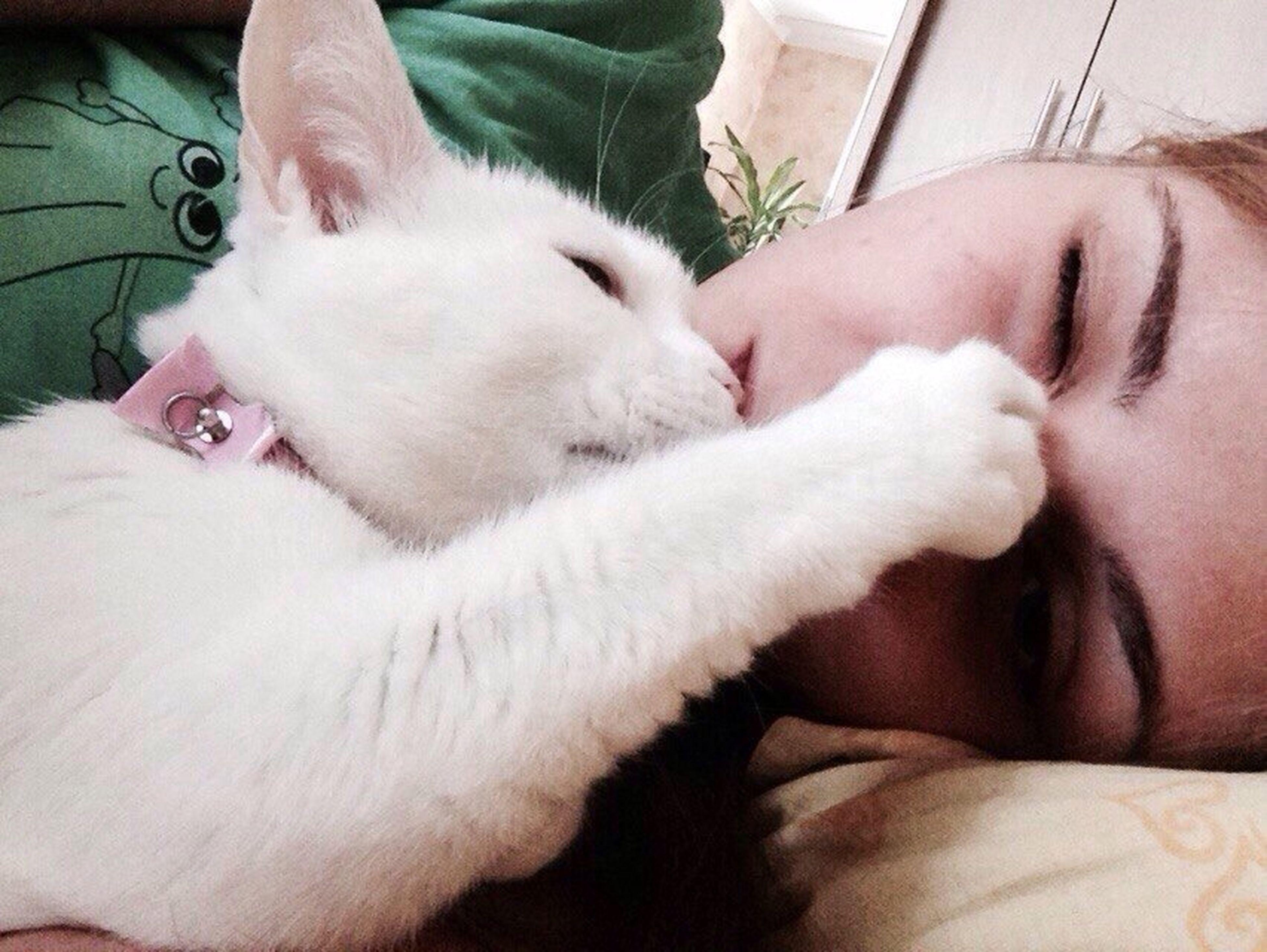 Му Dear Cat I Love My Kisik