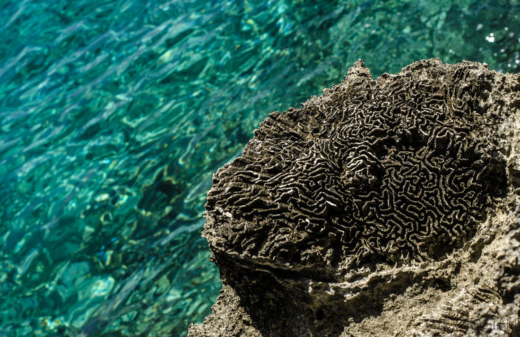 Laberintos naturales donde perderce da placer ... Sea Water Nature No People Day Textured  Outdoors UnderSea Close-up San Andres Island,Colombia Paradise Paraíso Magic Nature Caribean Adventure Perfect Beauty In Nature 50mm Life Tranquility Stone Laberinto Perfectnature Amazing