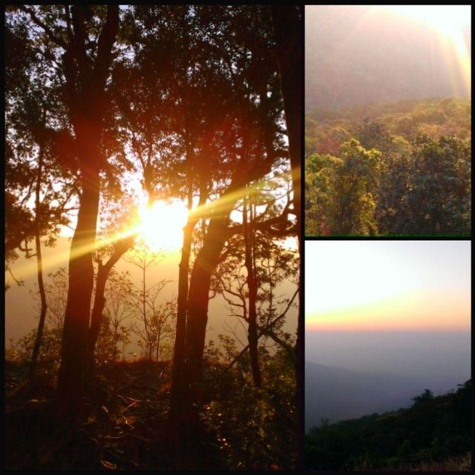 Khaoyhai in my heart. Khaoyhai Thailand Sunrise Forest Picoftheday Igers Htc8x