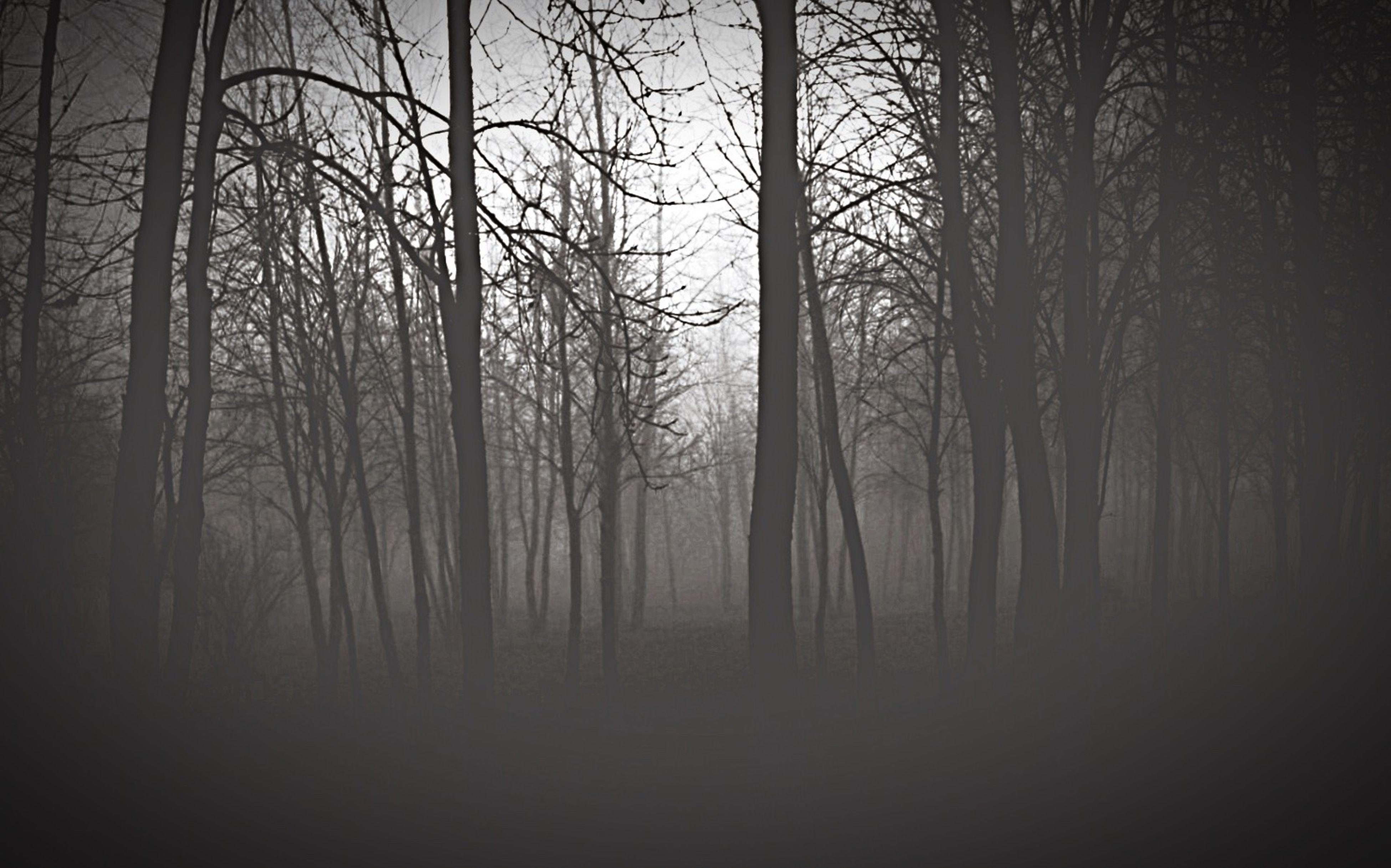 tree, tranquility, forest, tranquil scene, tree trunk, bare tree, woodland, fog, nature, scenics, branch, beauty in nature, silhouette, growth, non-urban scene, dark, foggy, landscape, weather, no people