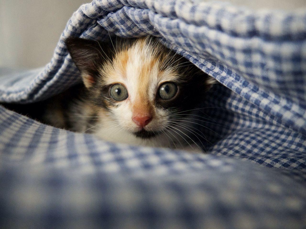Gaïa Cat