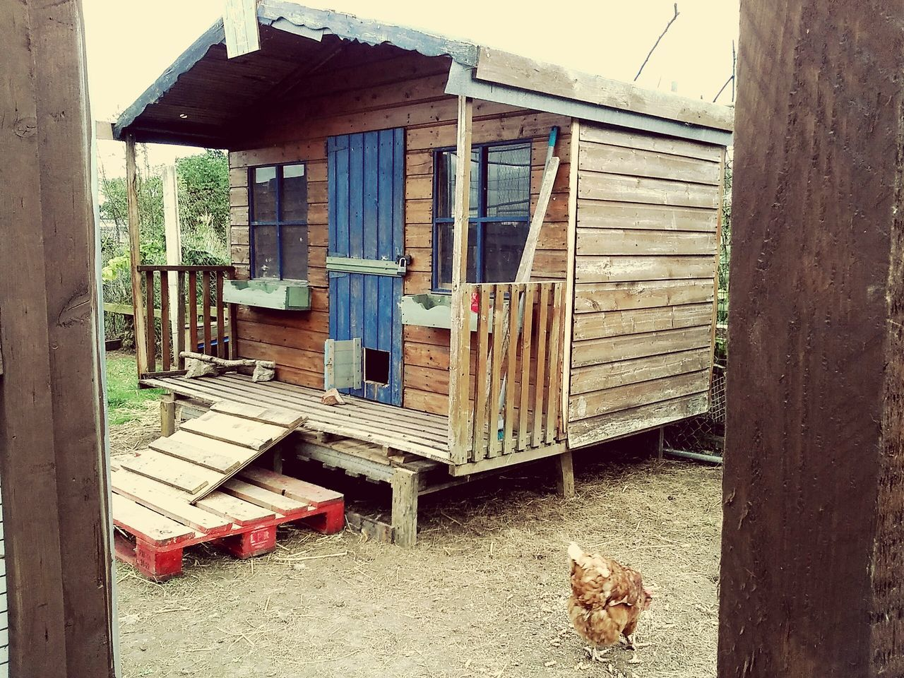 Architecture Built Structure Animal Themes Building Exterior Domestic Animals Entrance Front Door Weathered Outdoors Chicken Coops Messy Door