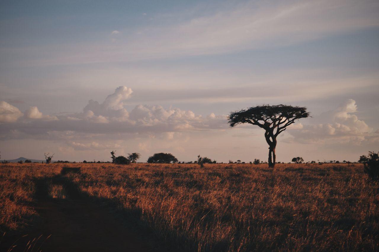 Taita hills, Kenya. Nature Tree Landscape Sky Beauty In Nature Outdoors Travel Destinations Safari Tsavo VSCO EyeEm Best Shots Travel Africa EyeEm Best Edits Adventure Kenya Taitahills