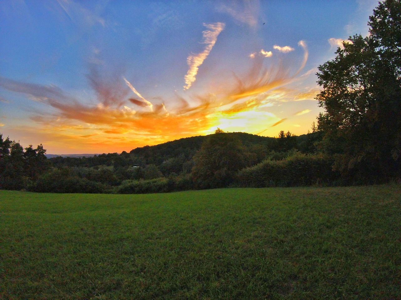 Gopro Session Gopro Goprooftheday Goprohero4 Goprophotography Sun Sunshine Tree Trees Snapseed Trees And Sky Sunset Green Grass Cloud Clouds And Sky Cloudart EyEmNewHere
