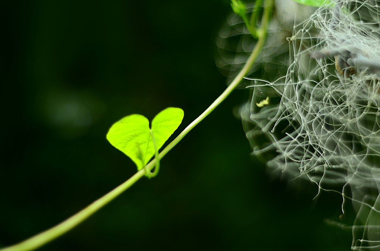 Beautiful stock photos of leaf, Close-Up, Day, Field, Fragility