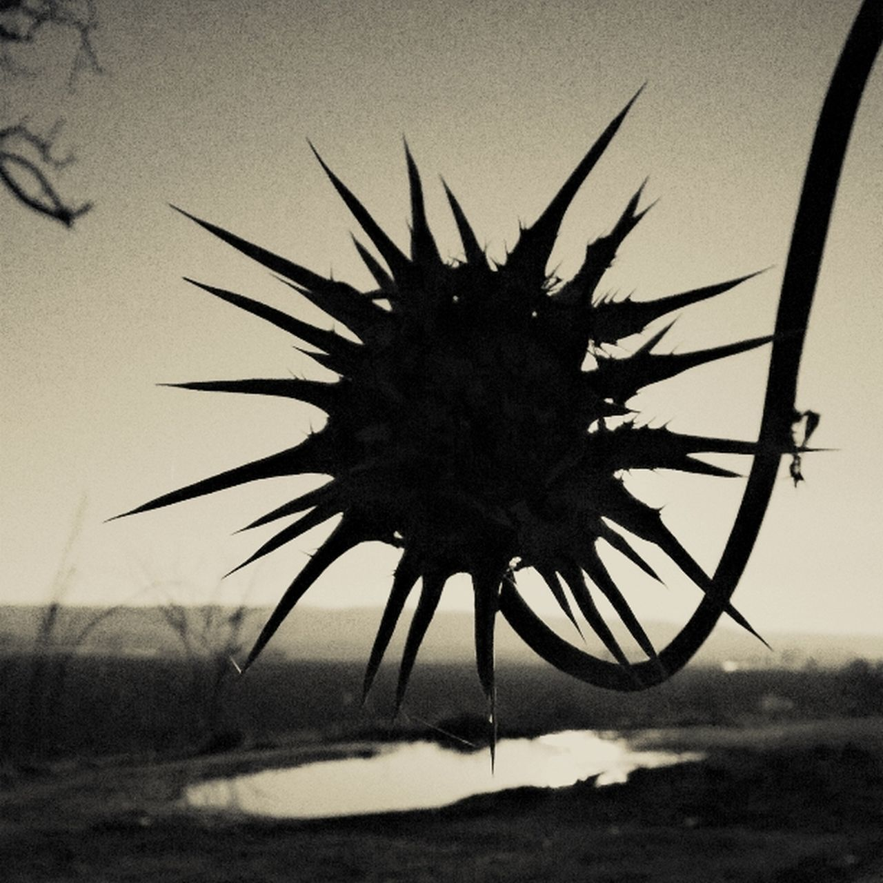 Time GetbetterwithAlex Black & White EyeEm Gallery Spikey Flower Flowers Cardo
