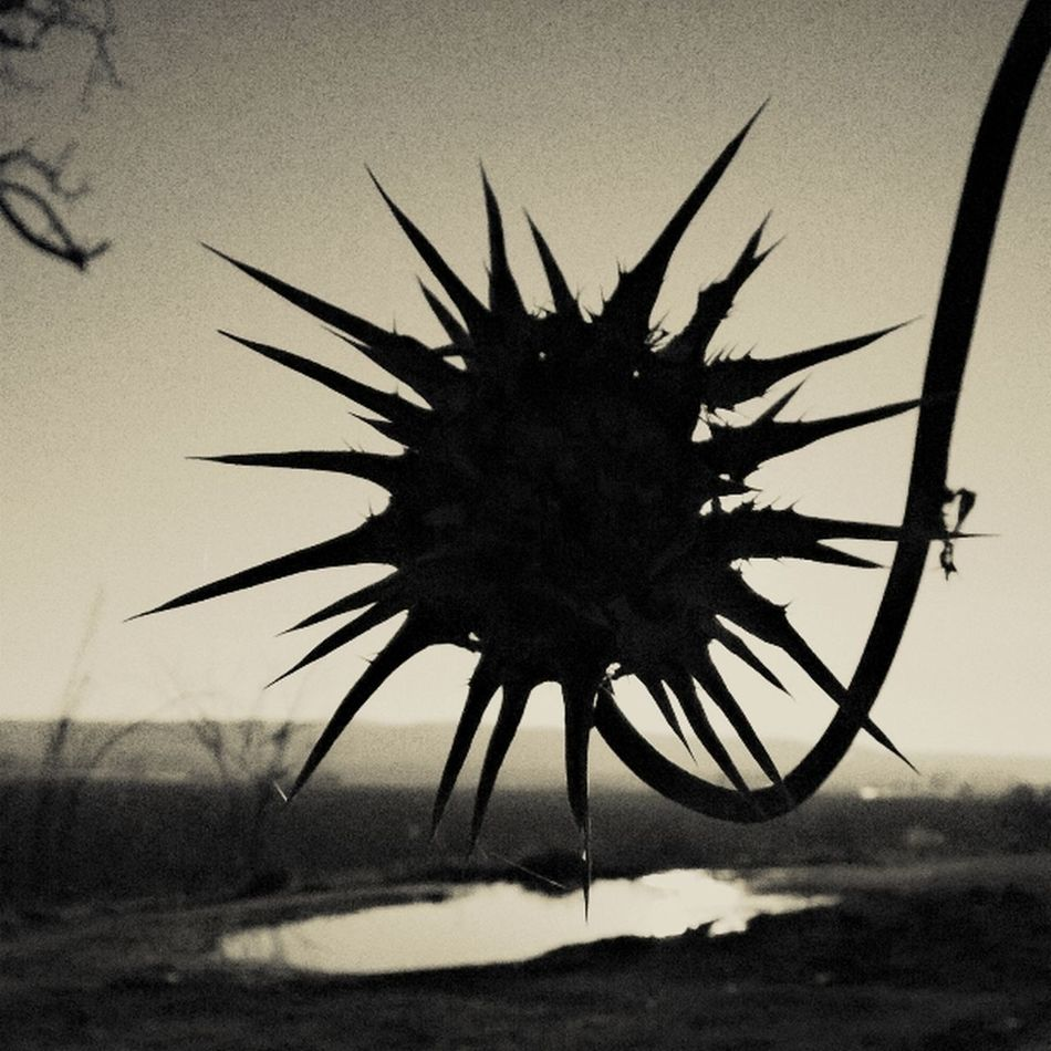 Time GetbetterwithAlex Black & White EyeEm Gallery Spikey Flower Flowers Cardo Scenics Hiding Place EyeEm Black Background EyeEmNewHere EyeEm Best Shots Eyem Collection Sky Beauty In Nature Tranquil Scene