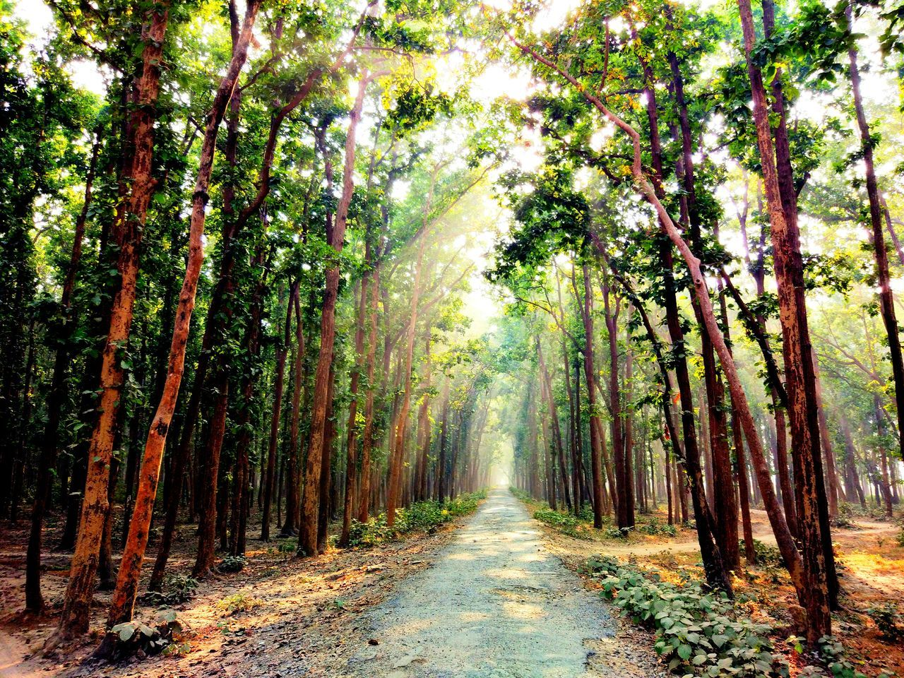 My Year My View Tree Nature Beauty In Nature Forest Outdoors Day No People The Way Forward Sunlight Brokenroad Green