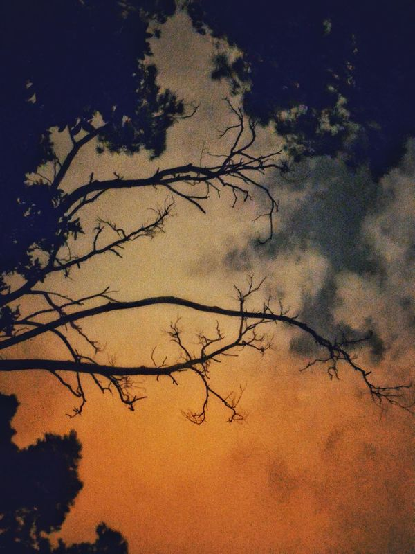Nature Tree Sky Low Angle View Beauty In Nature Silhouette Tranquility Branch Outdoors EyeEm Gallery Getting Inspired EyeEm Masterclass Exceptional Photographs Check This Out My Unique Style Low Angle View Cloud - Sky Moon Light Through Trees Forest EyeEm Best Shots - Nature Scenics Tree Sunset