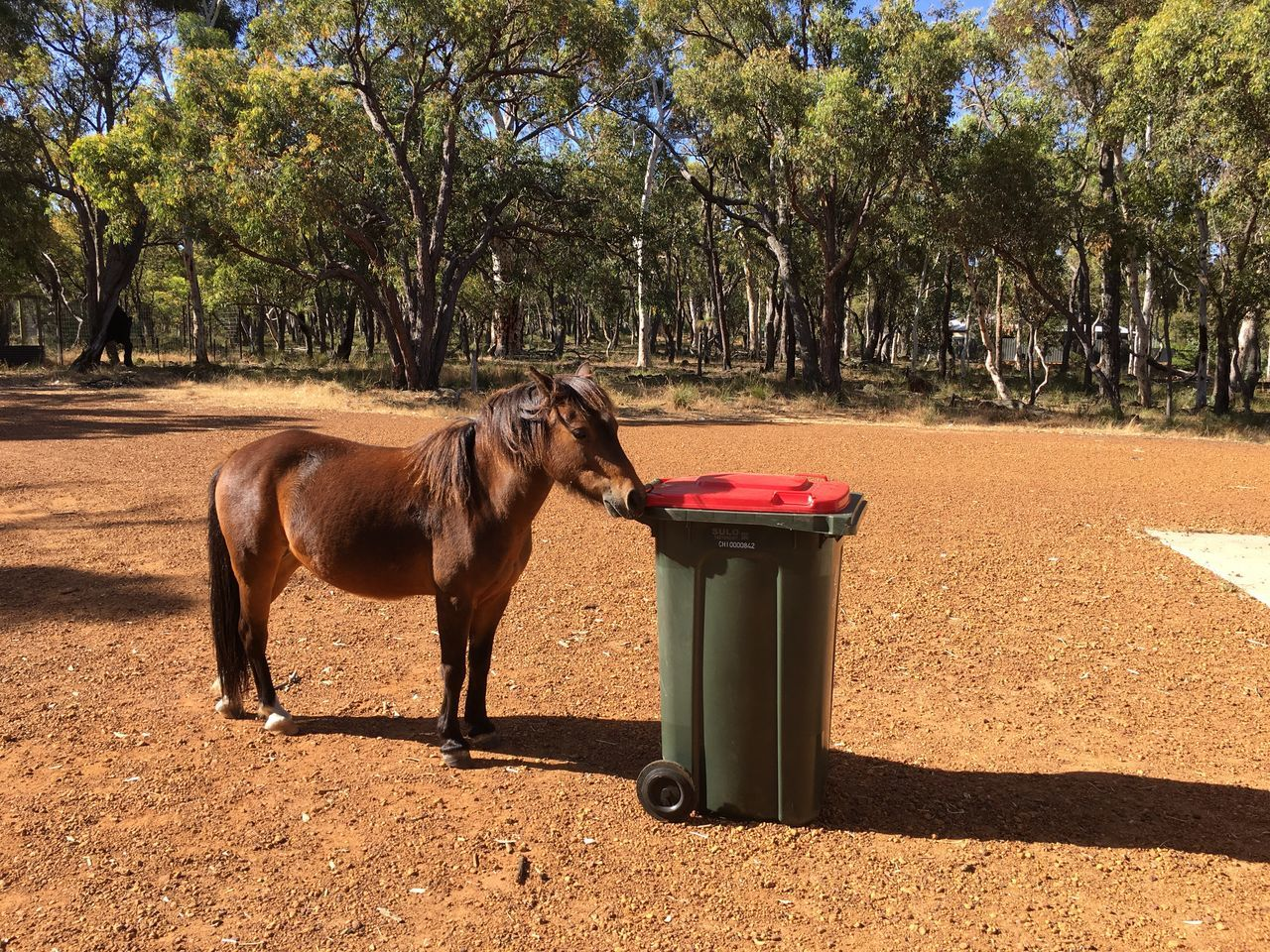 Abstract Horse Animal Themes Rubbish Bin Recycle One Animal Nature Domestic Animals Pony EyeEm Nature Photography Eyem Best Shots Nature_collection Nature Natural Pet Bin Smell Dinner Refuse Countryside Farm Abstract Eyem Nature Lovers  Abstract Photography