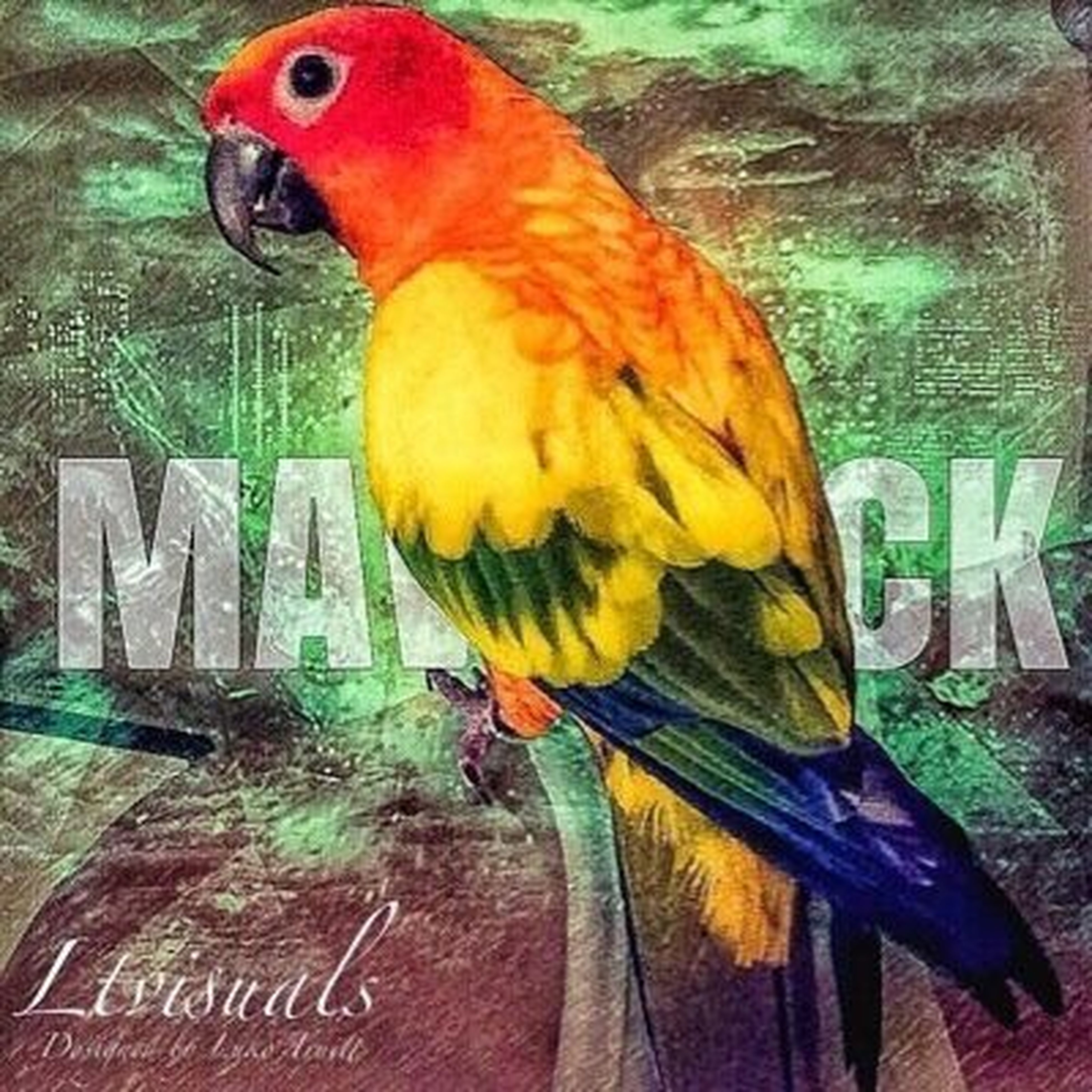 parrot, bird, multi colored, one animal, animal themes, perching, indoors, close-up, macaw, nature, no people, gold and blue macaw, day, beauty in nature, rainbow lorikeet