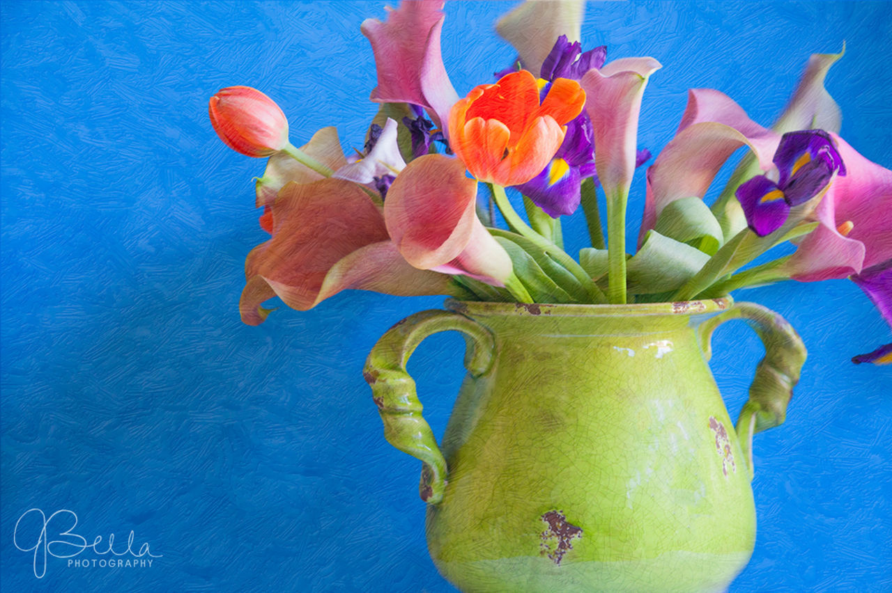 Beauty In Nature Blue Blue Background Bouquet Close-up Day Flower Flower Head Fragility Freshness Indoors  Mixed Flowers Multi Colored Nature No People Studio Shoot Vase Vase Of Mixed Flowers