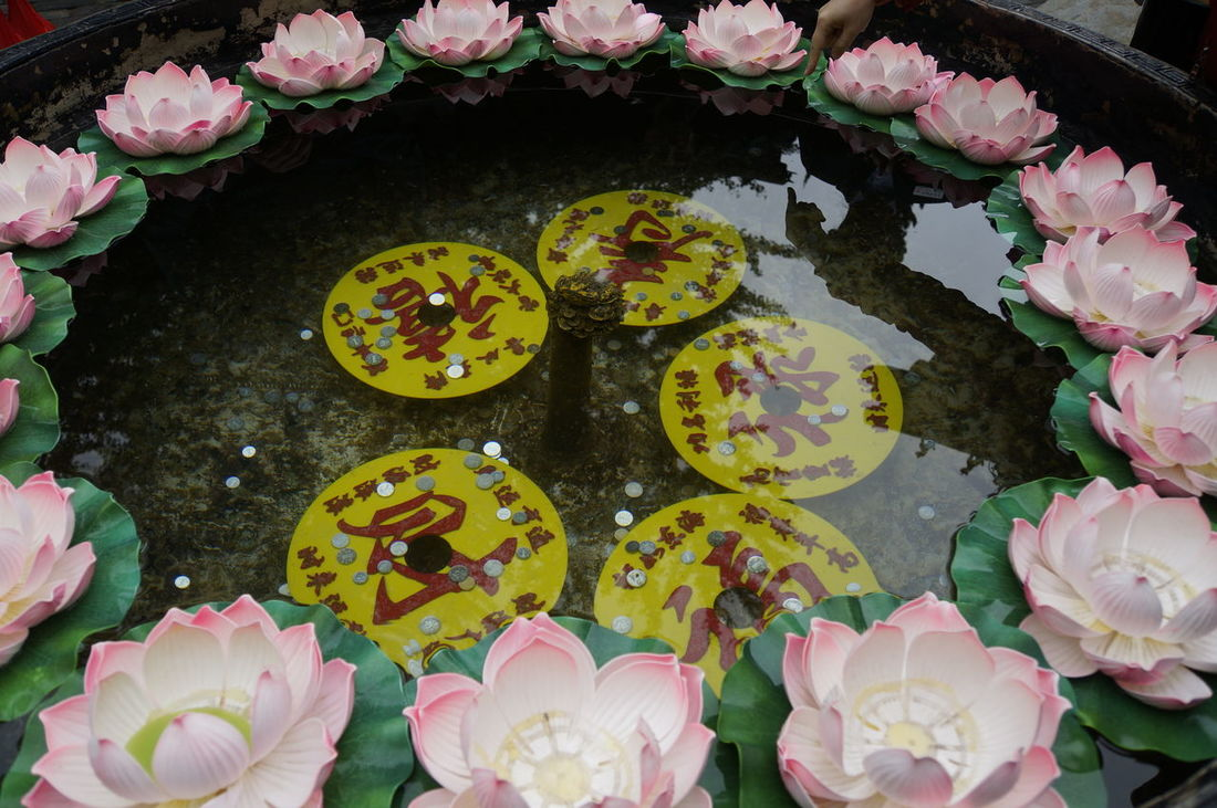 Wishing well Beauty In Nature Celebration Close-up Daoism Day Flower Flower Head Fragility Freshness High Angle View Nature No People Outdoors Petal Pink Color Taishan Variation