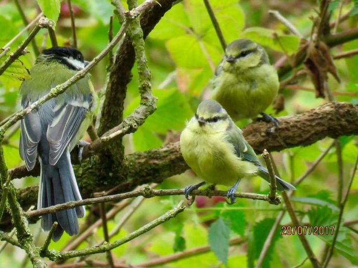Bird Branch Animal Wildlife Nature Perching Animals In The Wild Animal Themes Food Outdoors No People Beauty In Nature Eating Day Tree Close-up