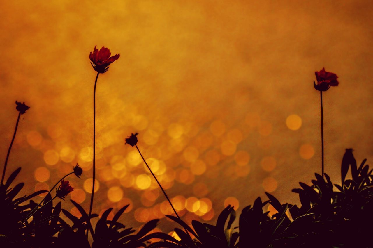 EyeEmNewHere Canon_official Photooftheday Click Click 📷📷📷 Myshot Nature Flower Sunset Peaceful Intothedarkness Creative Light And Shadow Naturallight Leaves🌿 Lights Life Canonphotography Canon60d Orange Background Sunset_captures BeautifulSunset Scenics Nature Reserve