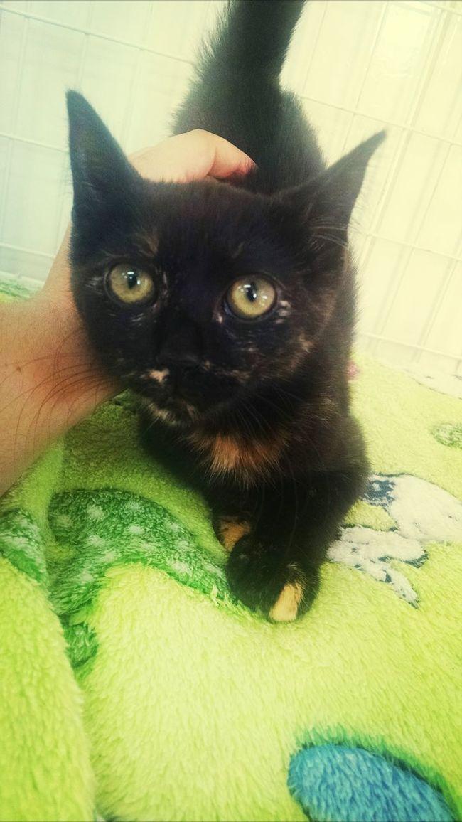 Cat♡ Catblack Sempreconceito <3