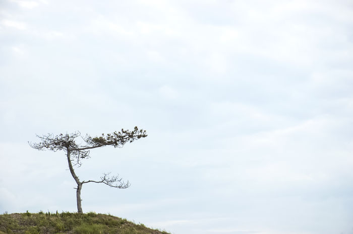 Copy Space EyeEm Nature Lover EyeEm Gallery Nature Photography Beauty In Nature Branch Cloud - Sky Clouds And Sky Dune Eye4photography  Lone Minimal Minimalism Minimalobsession Nature Nature_collection No People Scenics Sky Tranquil Scene Tree Tree_collection
