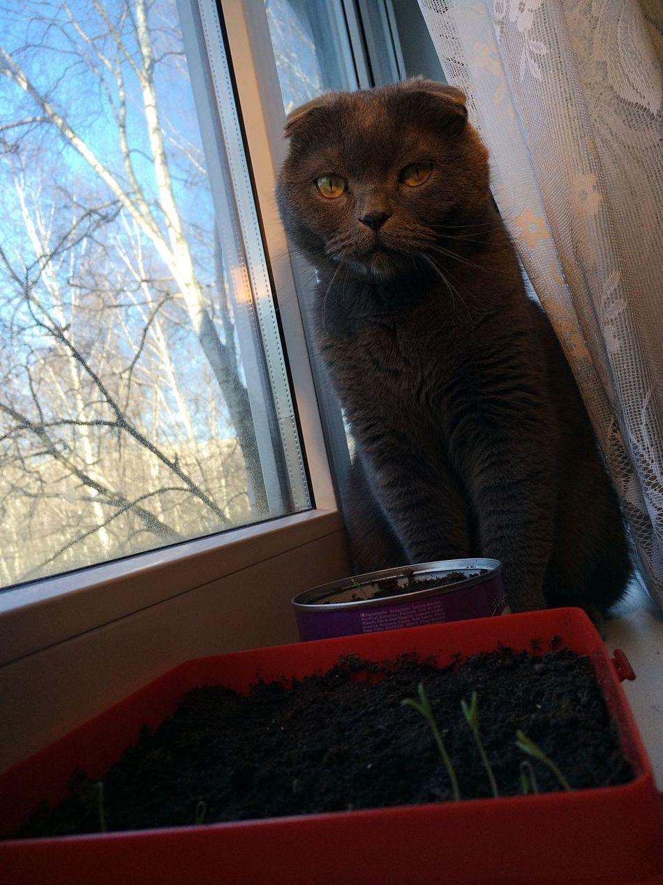 котбанан кот котэ курскийремонт Cat Cats Scottish Fold