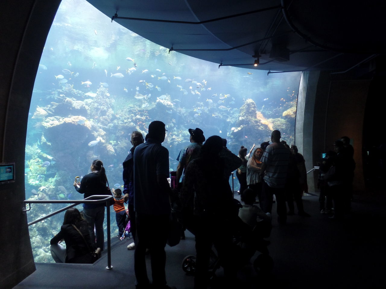 aquarium, real people, men, women, animals in captivity, indoors, leisure activity, mixed age range, silhouette, large group of people, sea life, watching, water, lifestyles, sea, swimming, childhood, nature, day, sky, people, adult