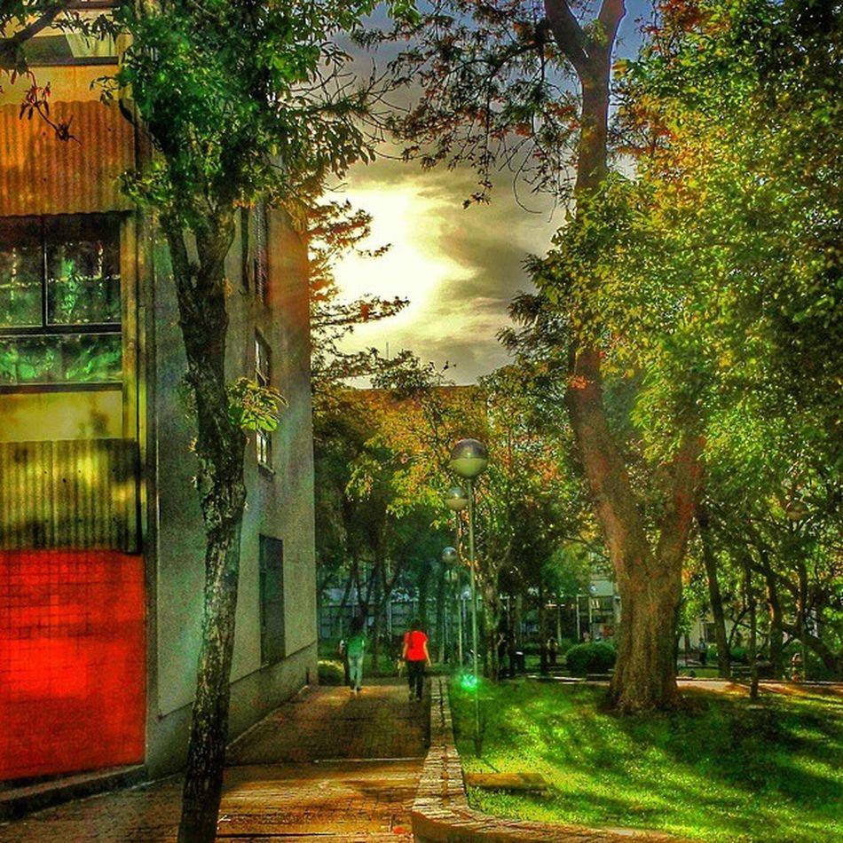E a tarde continua assim *,*.... Tarde  MundoPucrs Pucrs Summer Sun Sunset Trees Nature Clounds  Instaphoto Instapoa Poa Instapoa Instalife Photos Photografy Paisagem Natureza Monday Life