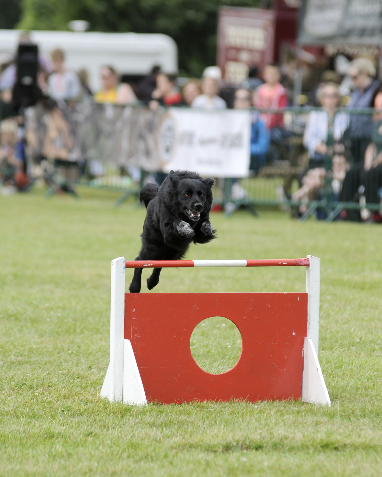 Border Collie Country Fair Day Out Dog Agility Dog In Action Dog Jumping Dog Photography Dogs