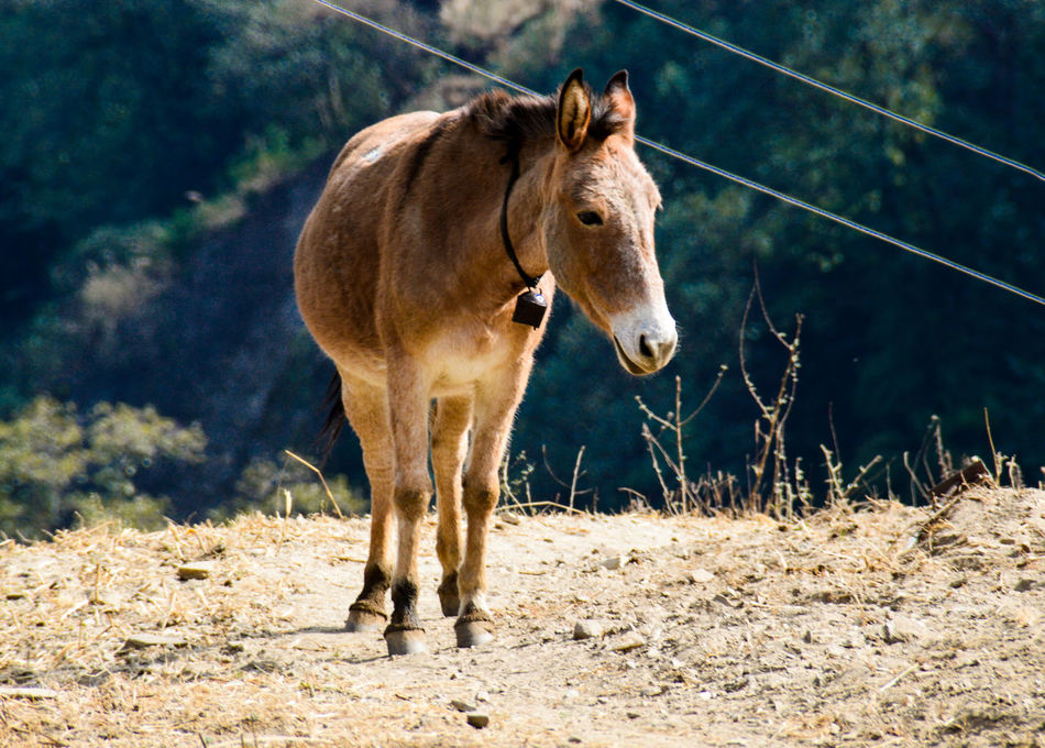 Donkey One Animal Animal Mammal Animal Themes Day Domestic Animals Outdoors Animals In The Wild Animal Wildlife Standing Nature No People Grass Close-up Beast Of Burden Nepal