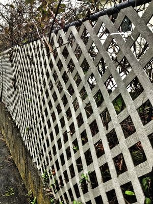 fence by Chris
