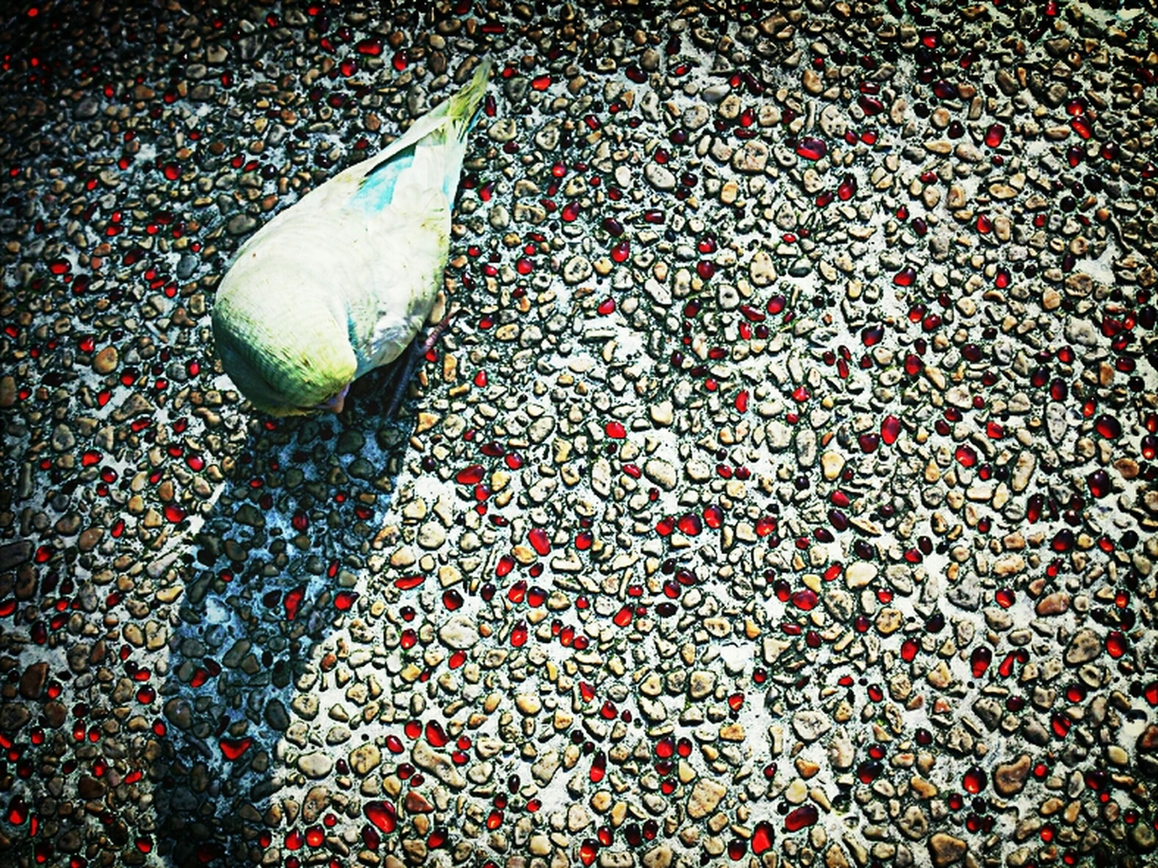 high angle view, street, bird, outdoors, elevated view, animal themes, day, no people, shoe, directly above, ground, white color, red, sunlight, close-up, wildlife, cobblestone, nature, water, shadow