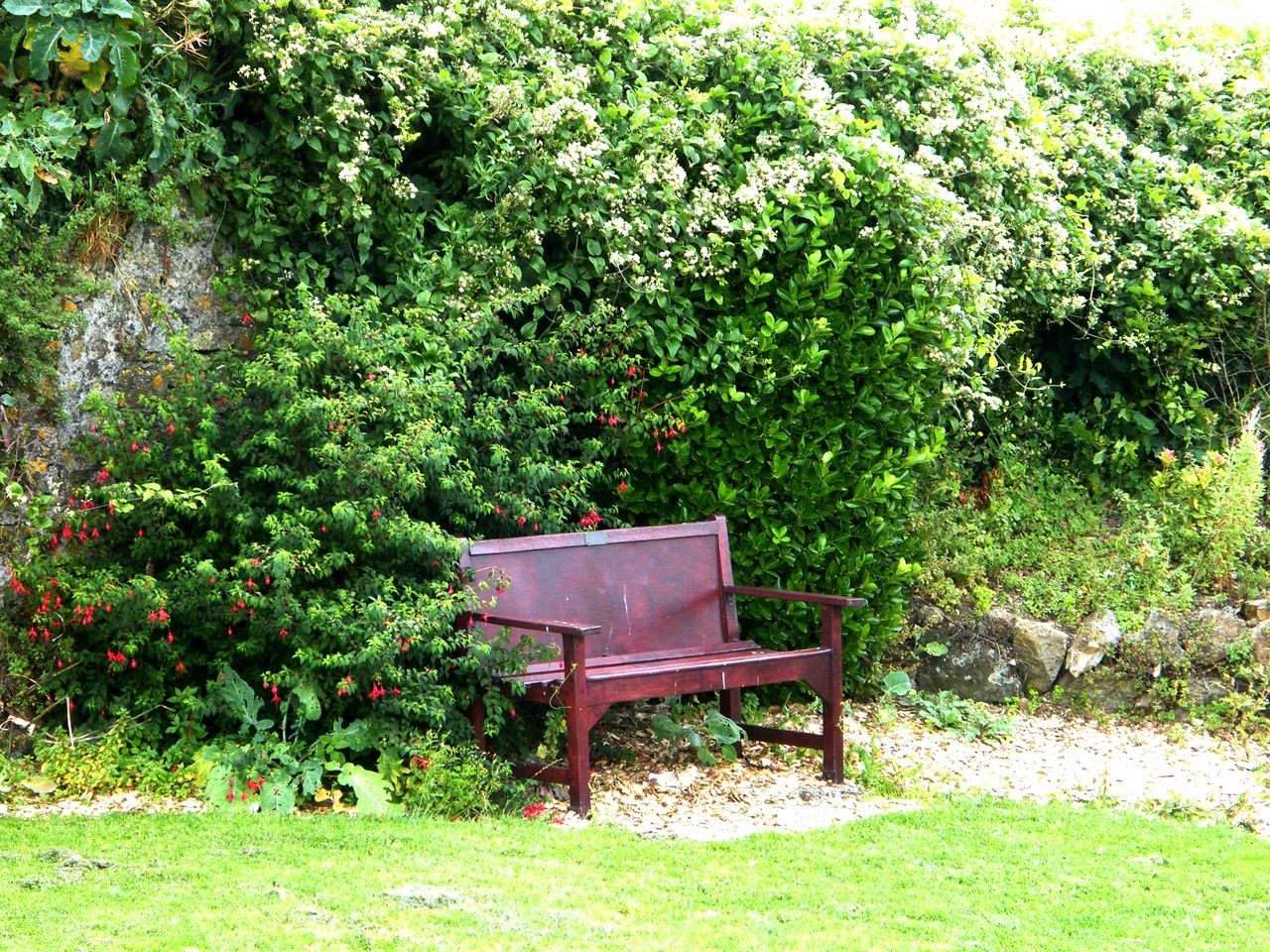 Beauty In Nature Chair Day Grass Green Color Growth Nature No People Outdoors Pembrokeshire Pembrokeshire Coast Pembrokeshire Coastal Path Plant Tenby Tree Garden Seat Garden Bench The Bench Seaside Garden