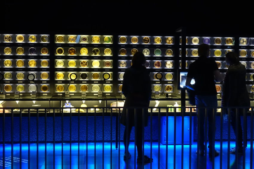 Micropia Museum near Artis  Zoo of Amsterdam at Night Lowlight Blue Tourists