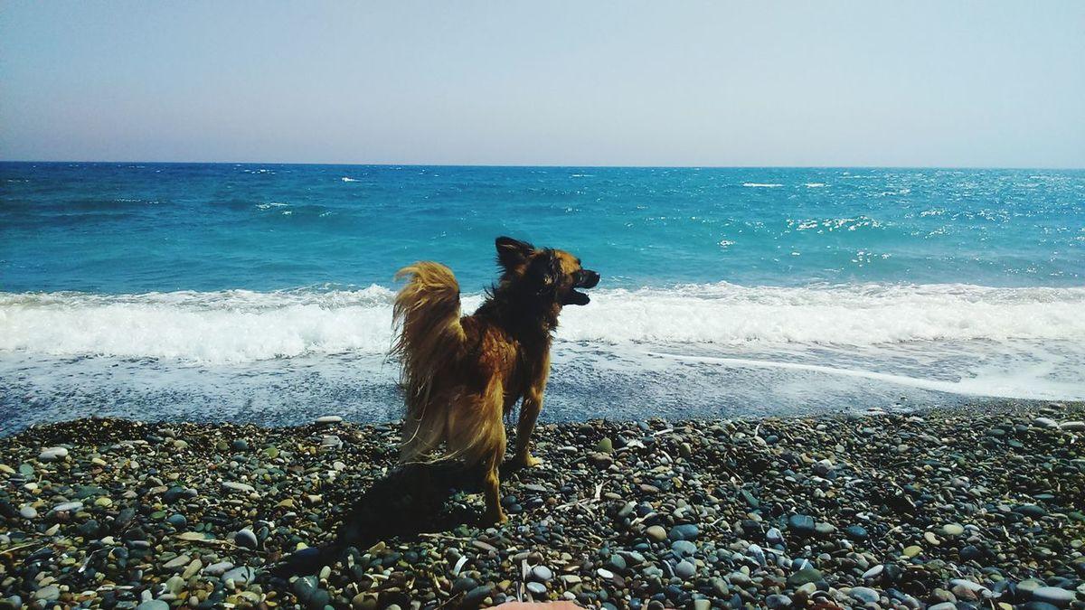 Tati enjoy the beach Dog Doggie Terrier Mix Pet Beach Summer Medeteranian Sea Nature