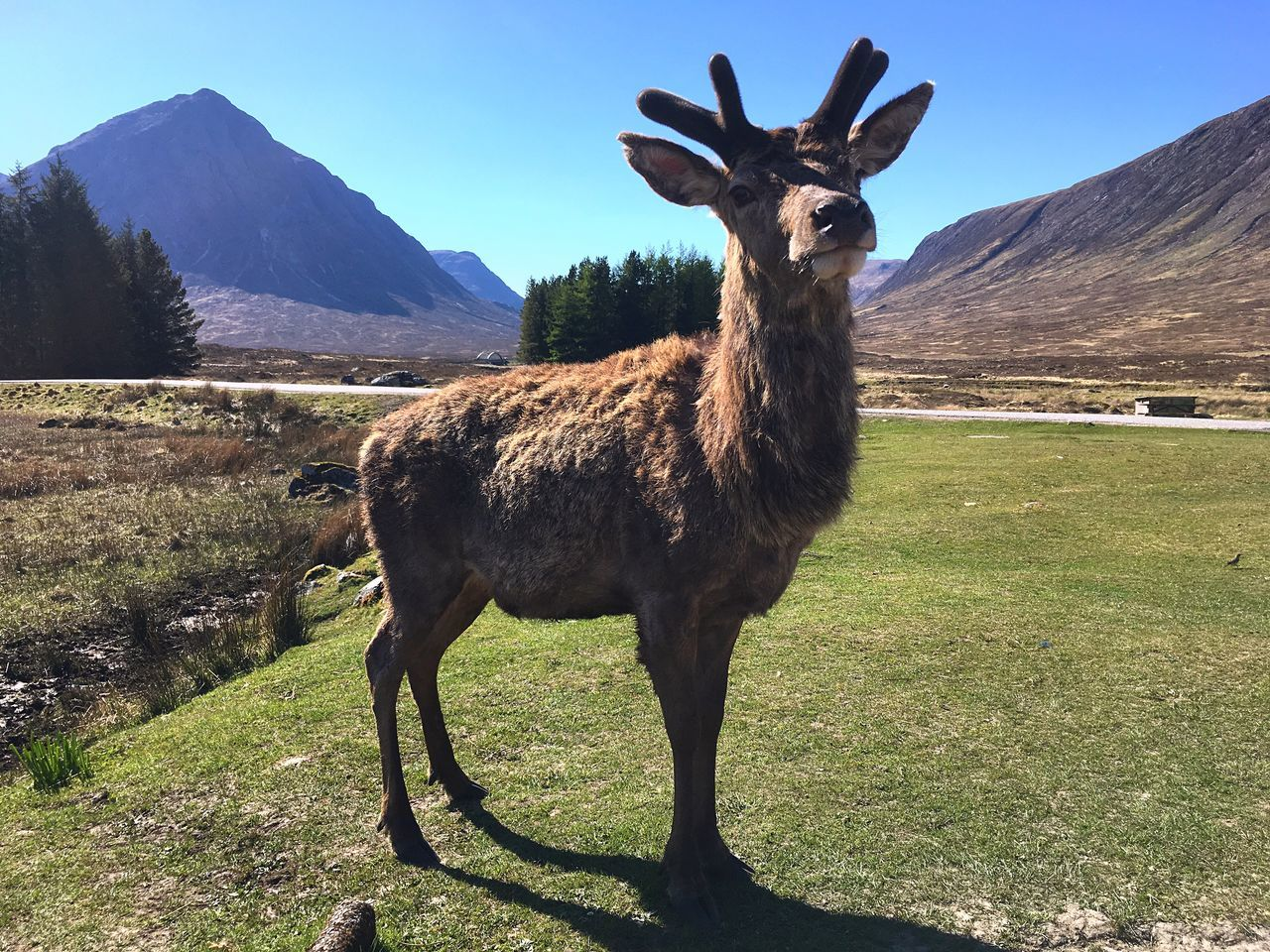 animal themes, mountain, grass, one animal, day, field, nature, mammal, outdoors, standing, mountain range, domestic animals, no people, landscape, green color, animals in the wild, sunlight, beauty in nature, llama, livestock, scenics, sky