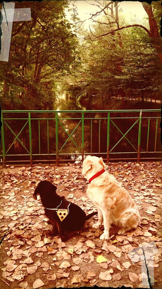 ... Kimba ! yes Phill ! .... I see the autumn is comming ... Animal Themes Outdoors Dog First Eyeem Photo