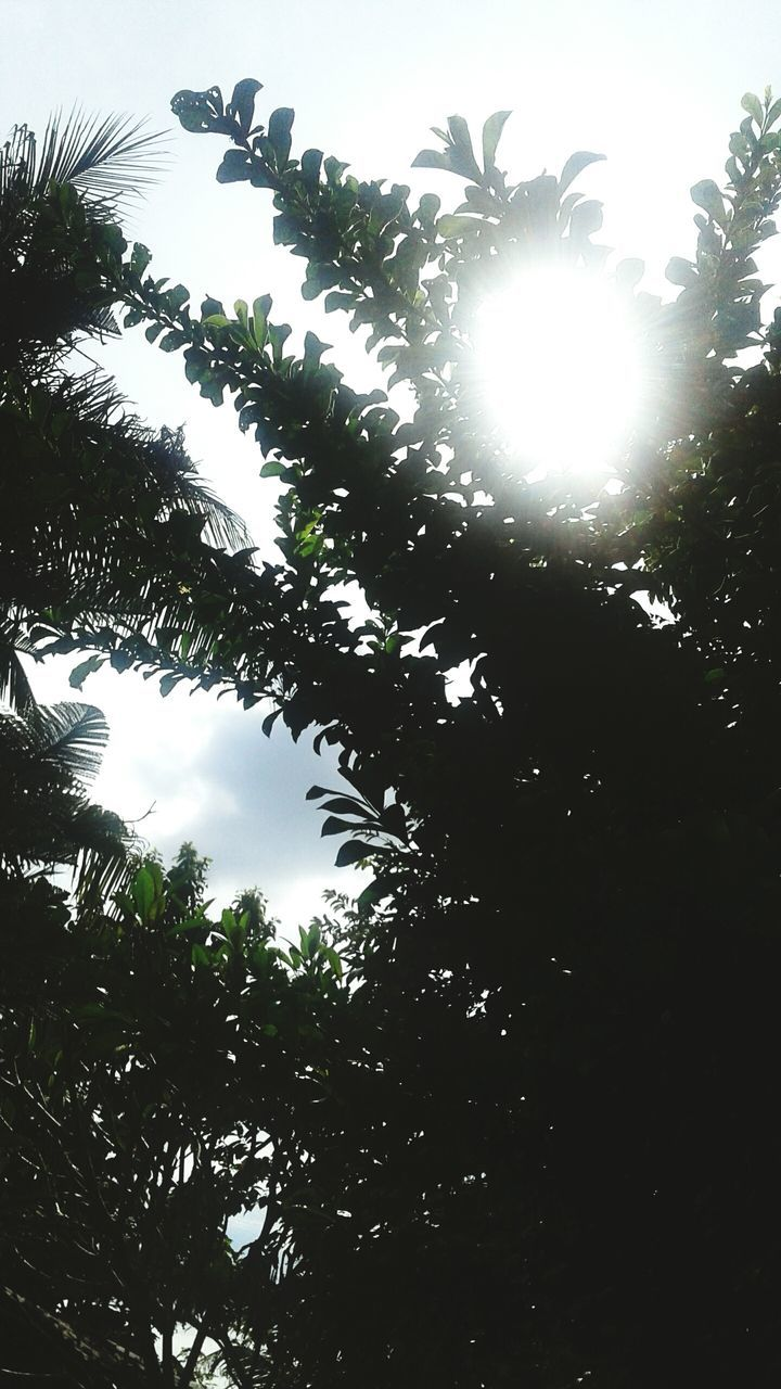 tree, low angle view, growth, no people, nature, outdoors, sky, beauty in nature, leaf, day