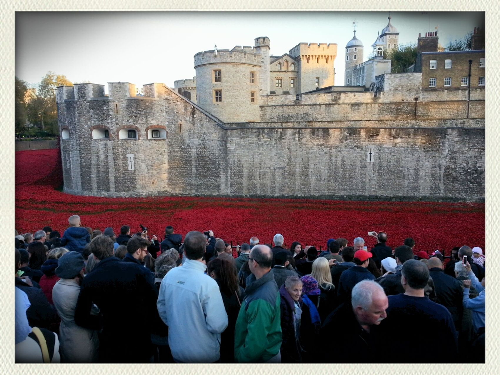 Poppies At The Tower Of London WW1 Centenary