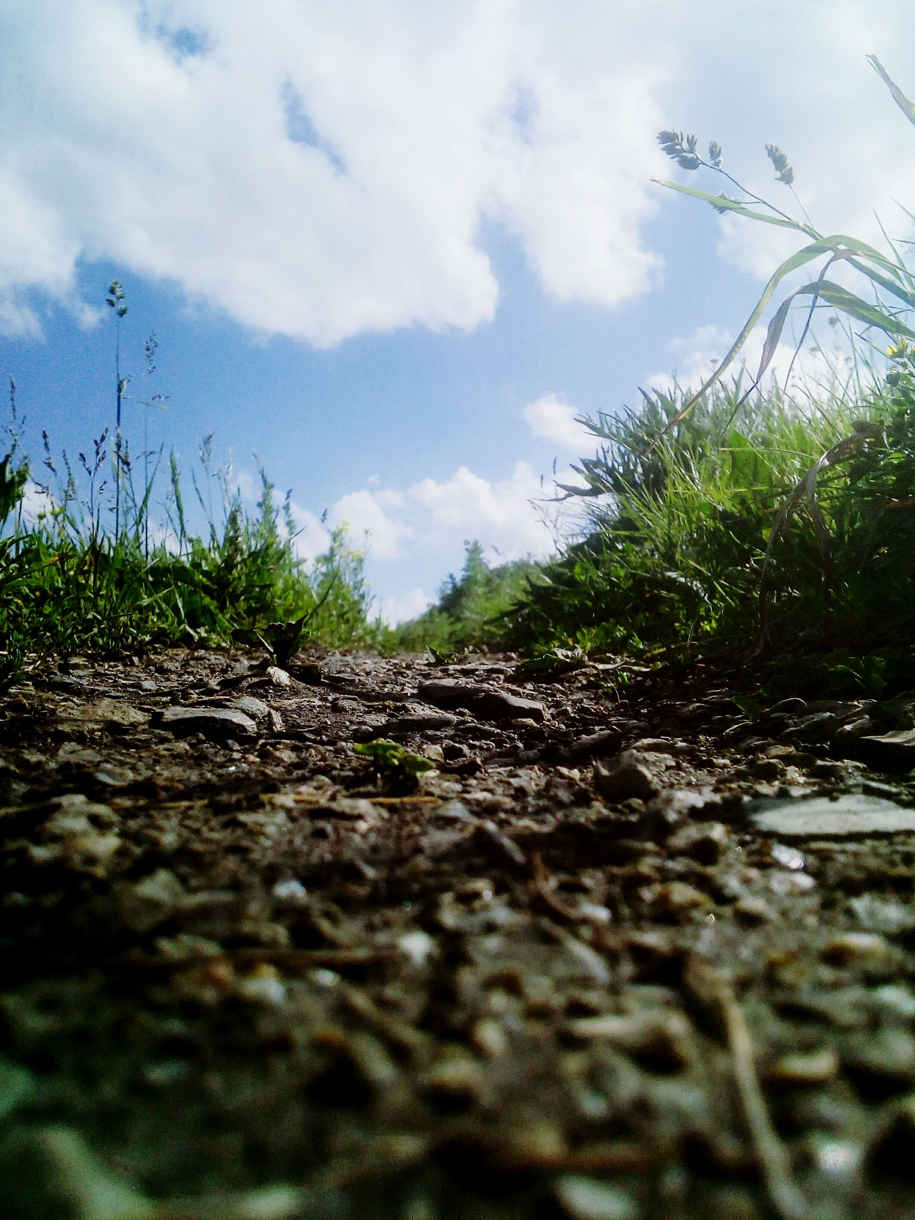 surface level, growth, nature, day, no people, plant, outdoors, cloud - sky, sky, beauty in nature, close-up, grass