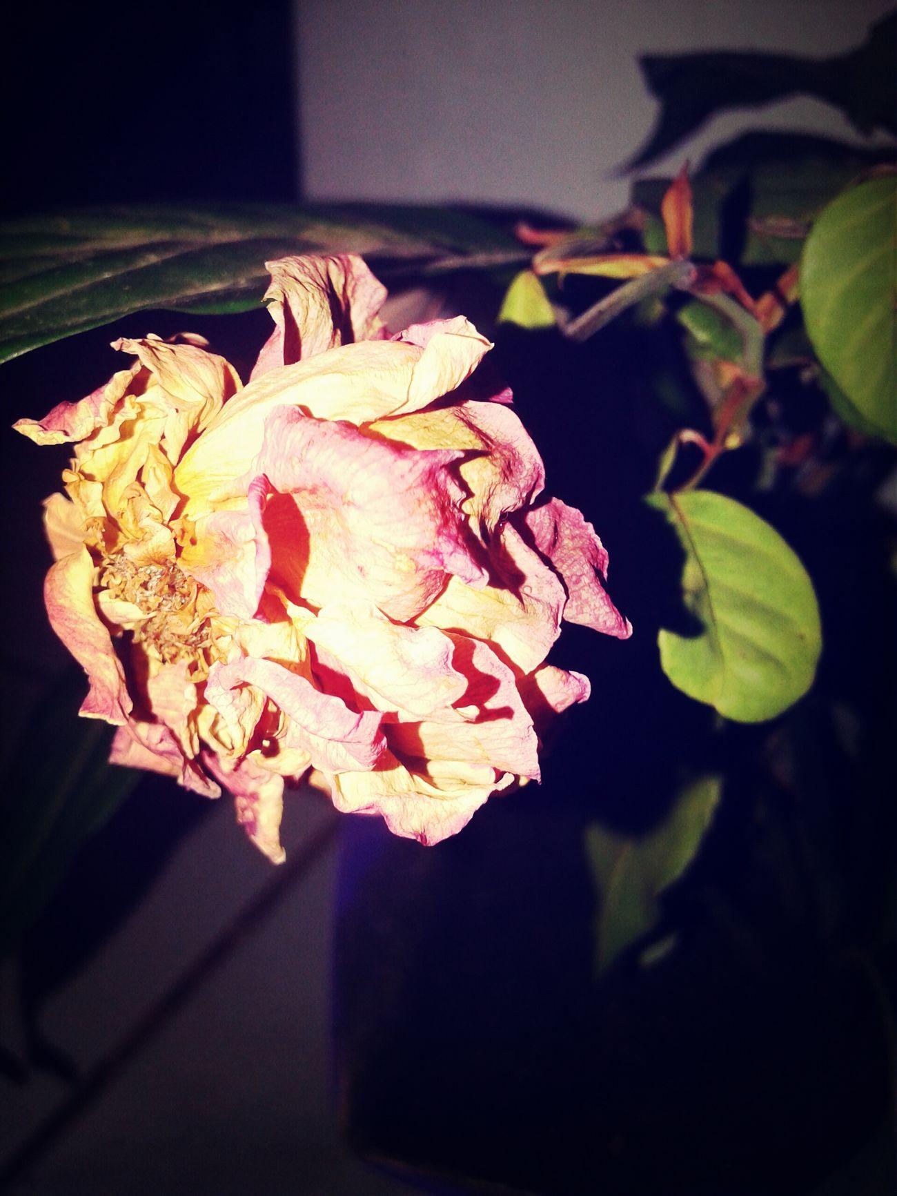 """""""A erva seca, a flor murcha, mas a palavra do nosso Deus dura para sempre."""" - Isaías 40:8 {8th} Thanks God ♥Bible Faith HurtFlower 31 On December"""