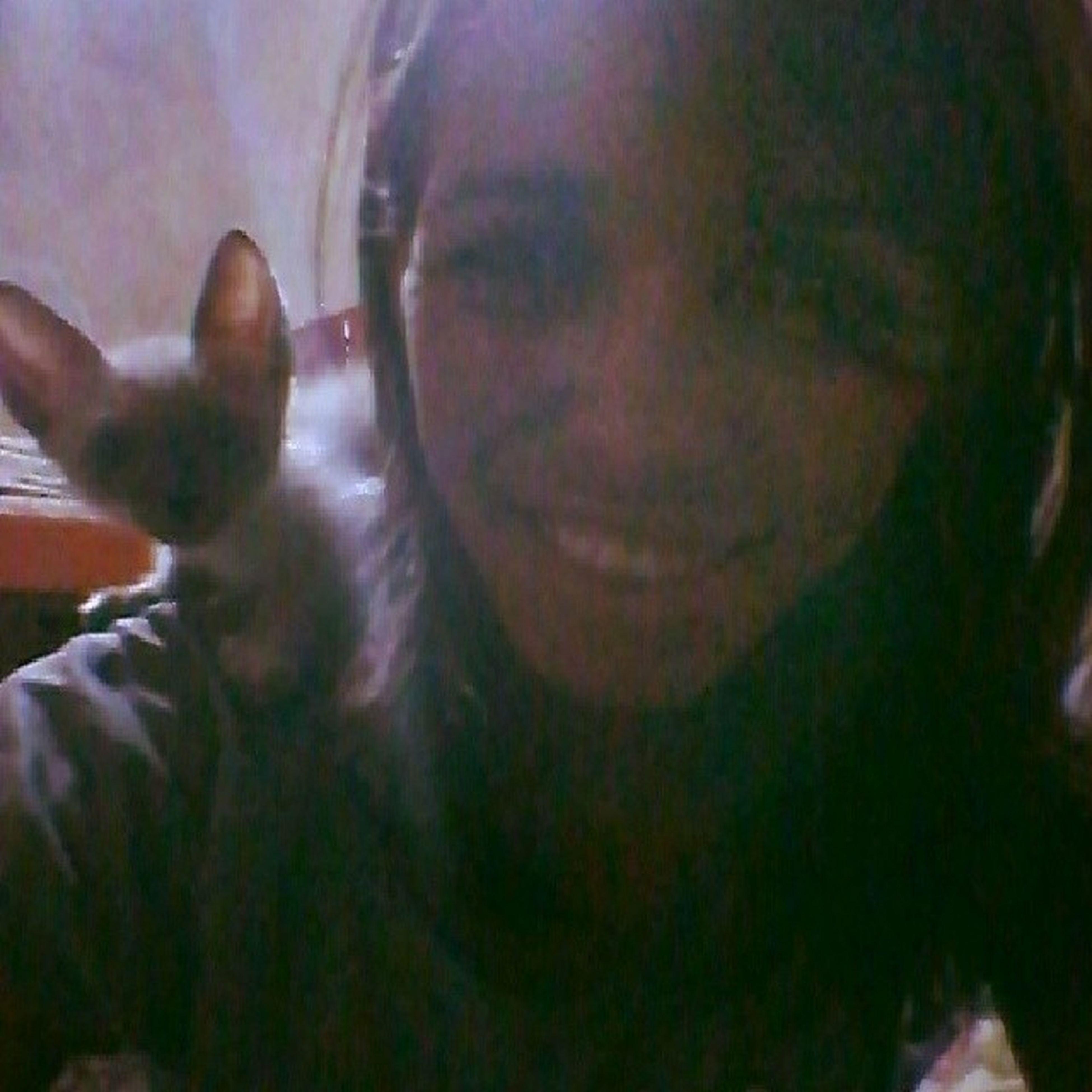 Não era só o Angh que tinha um lemory, eu também tenho um Momo aqui em casa hahahaha Cat Fofo Orelhudo