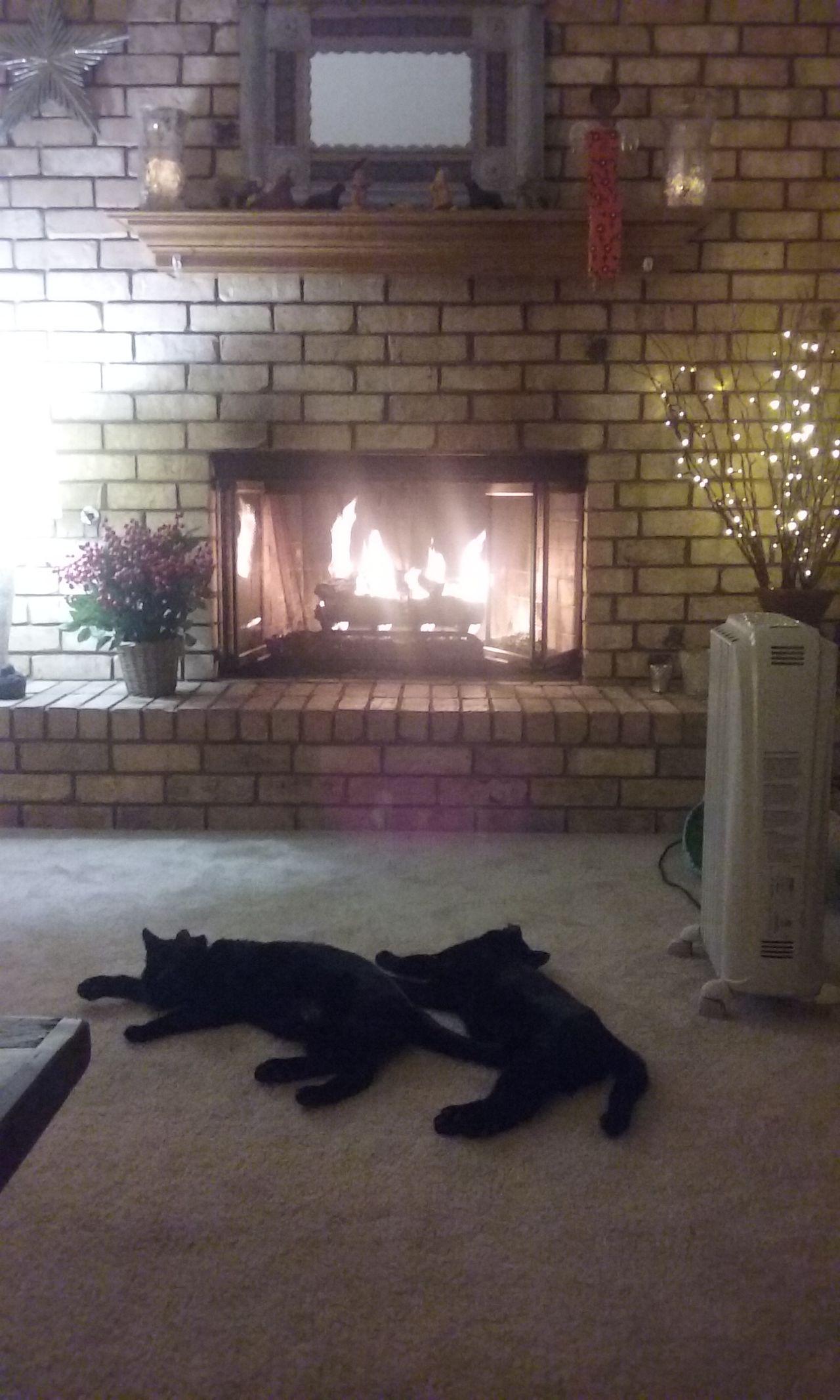 Fireplace Love Animal Themes Brick Wall Cats Cats Of EyeEm Cats 🐱 Fireplace Fireplace Warmth Friends Indoors  Mammal No People Pets Snuggle Snugglebuddy Two Cats Sleepin Warm
