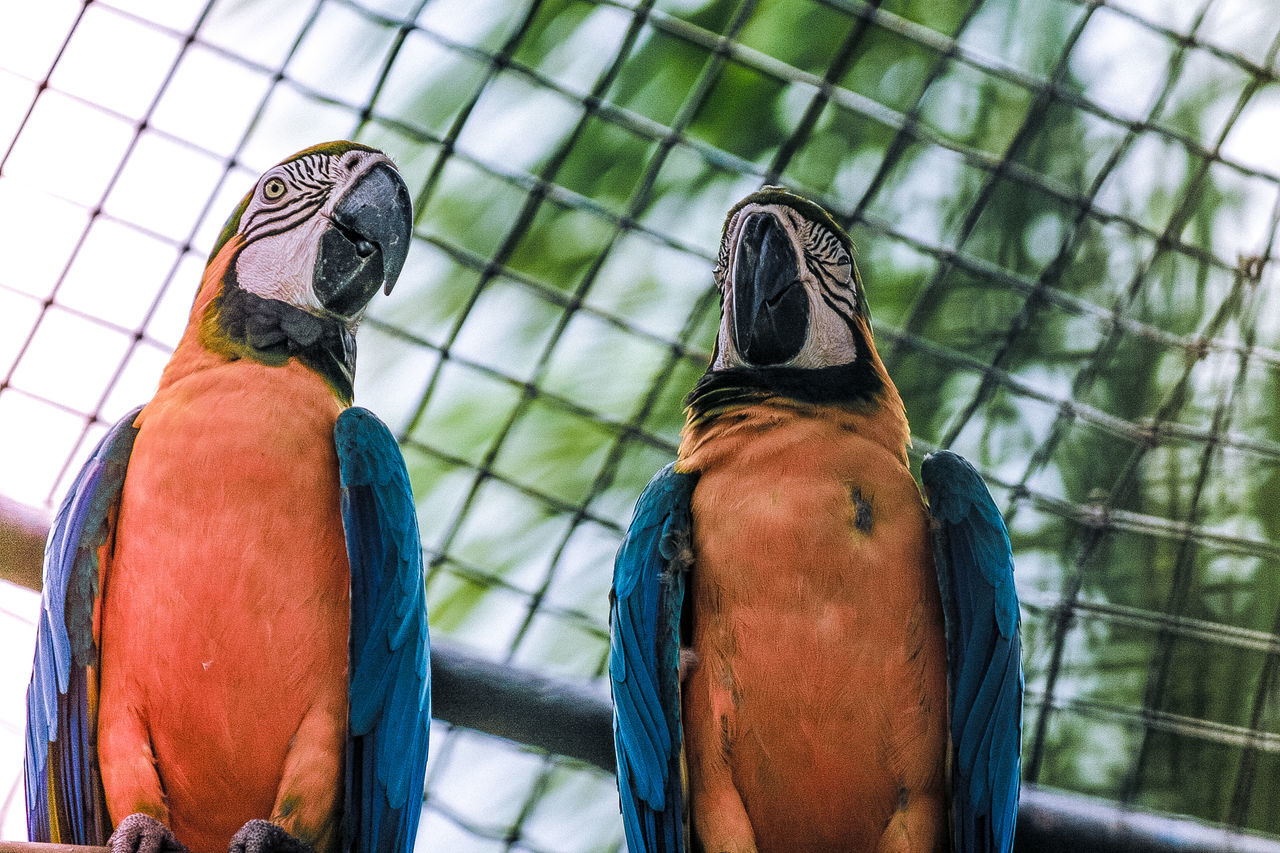 Animal Photography Beak Birds Birds Of EyeEm  Birds_collection Birds🐦⛅ Macaw Bird. Macaw Parrot Nature Photography